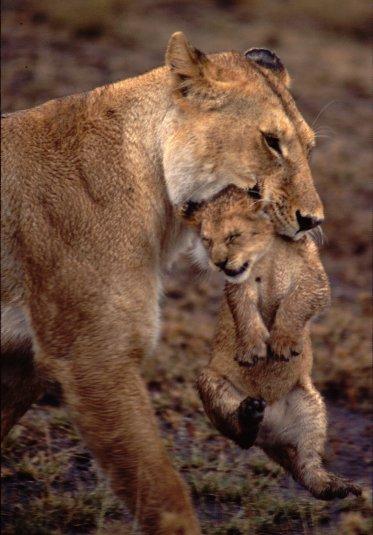 セレンゲティ国立公園の画像 p1_20